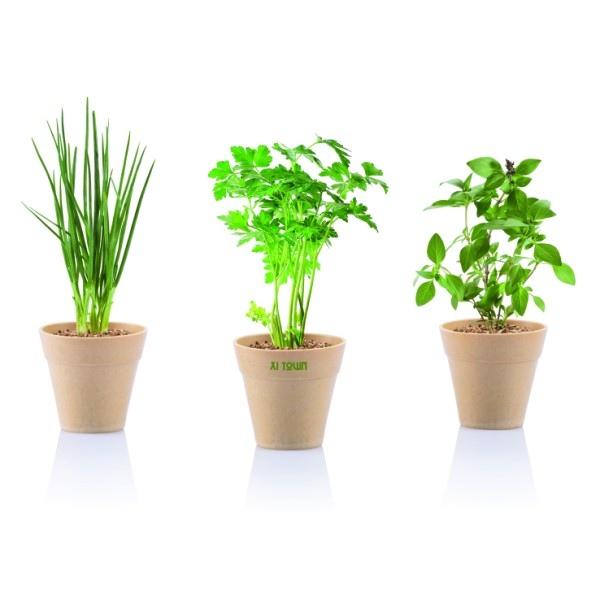 graines 224 semer en petits pots cadeau publicitaire en vente au prix grossiste