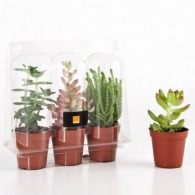 3 plantes grasses en serre