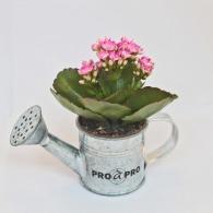 Arrosoir en zinc avec mini plante personnalisable fleurie