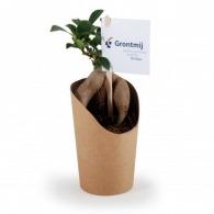 Bonsai publicitaires en pot carton