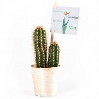 Cactus publicitaires en pot bois