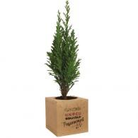 Cubo de madera con un árbol