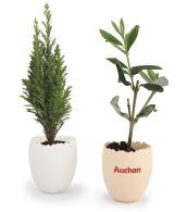 L'oeuf - mini plant personnalisable arbre