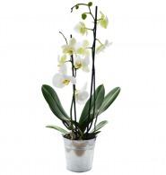 Orchidée grand modèle