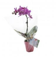 Orchidée petit modèle