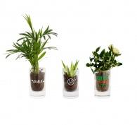 Mini plante publicitaire dépolluante en verre