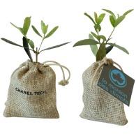 Mini plant d'arbre personnalisable en pochon : olivier, sapin, buis