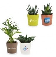 Mini planta depuradora en maceta de cerámica