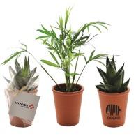 Mini planta depuradora en maceta de terracota