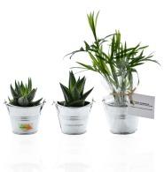 Mini plante publicitaire dépolluante en pot zinc