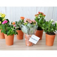 Mini plante logotée fleurie en pot terre cuite