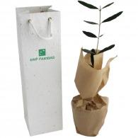 Planta de árbol en bolsa de semillas - Árboles de hoja caduca