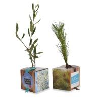 Plant d'arbre publicitaire en cube