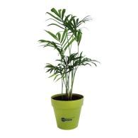 Plant personnalisé d'arbre en pot terre bambou