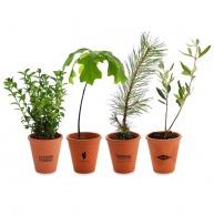 Plant d'arbre personnalisé en pot terre cuite