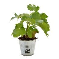 Plant d'arbre personnalisable en pot zinc