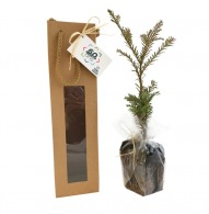 Plant d'arbre logoté en sac kraft