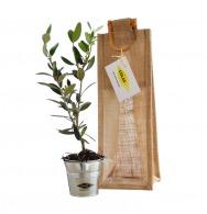 Plants promotionnel