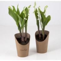 Plant personnalisé de muguet en pot