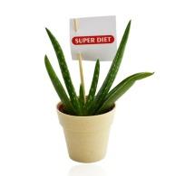 Plante publicitaire déco en pot bambou