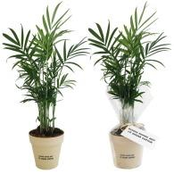 Plante personnalisée déco en pot ecolo bambou- biodégradable 10 cm