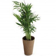 Plante personnalisable dépolluante zéro déchet