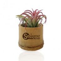 Plante personnalisable dépolluante en pot bambou