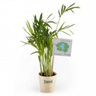 Plantes avec marquage
