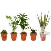 Plante logotée dépolluante en pot terre cuite 10cm