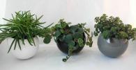 Plante logotée dépolluante en pot céramique aimanté
