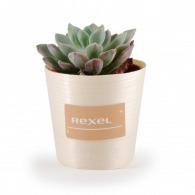 Plante publicitaire grasse en pot bois