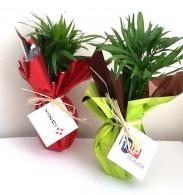 Pot palmier Éco