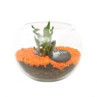 Kit terrarium publicitaire petit modèle 13cm - plante dépolluante