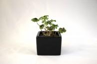 Trèfle à 4 feuilles personnalisable poussé (pot céramique)